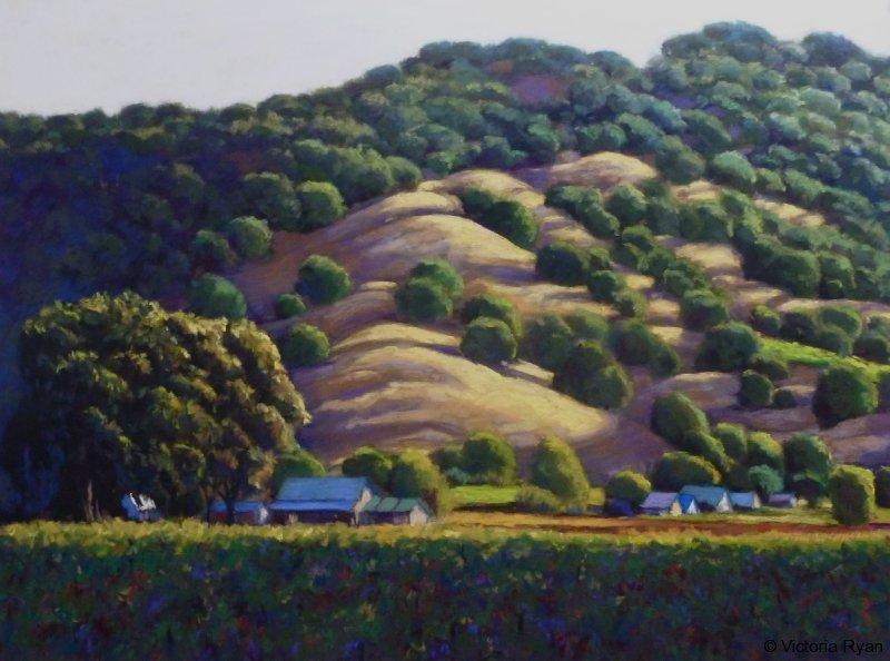 Vineyard hill evening