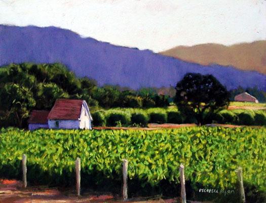 vineyardgreens.jpg